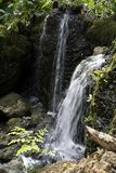 在生苔岩石的瀑布与蕨和绿叶在费尔柴尔德热带植物园在南佛罗里达 库存图片