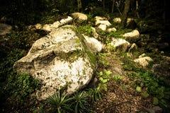 在生苔的木头的老岩石 库存照片