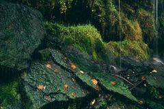 在生苔石头的下跌的水下落 库存照片