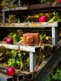 在生锈的台阶的葡萄酒照相机用红色苹果 免版税库存图片