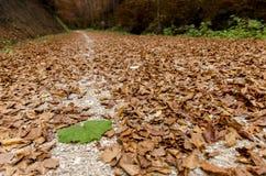 在生锈的红色中的大绿色叶子在秋天离开在胡同 免版税库存图片