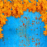 在生锈的金属背景的明亮的橙色秋叶  免版税库存图片