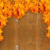 在生锈的金属背景的明亮的橙色秋叶  免版税图库摄影