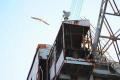 在生锈的钢结构的大白色海鸥飞行 库存照片