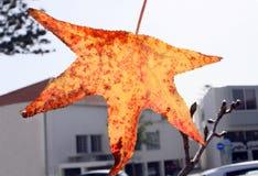 在生长在城市的树的秋天黄色叶子在11月在塞浦路斯 图库摄影
