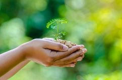 在生长幼木的树的手上 Bokeh绿化举行树自然领域草森林保护的背景女性手 免版税图库摄影