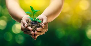 在生长幼木的树的手上 Bokeh绿化拿着在自然领域草森林保护的背景女性手树 免版税图库摄影