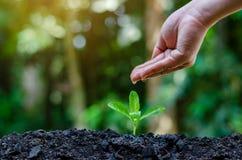 在生长幼木的树的手上 Bokeh绿化拿着在自然领域草森林保护的背景女性手树 免版税库存图片
