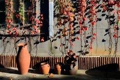 在用五颜六色的叶子盖的墙壁附近的泥罐 免版税库存图片