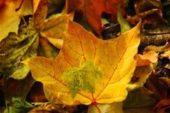 在用五颜六色的秋天叶子报道的地面上的两片叶子 库存图片