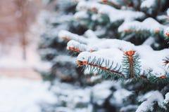 在用在冷的冬天天气的雪报道的多雪的森林杉木分支的冬天风景 图库摄影