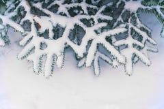 在用在冷的冬天天气的雪报道的多雪的森林杉木分支的冬天风景 免版税库存图片