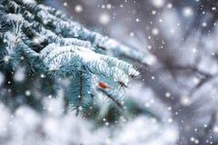 在用在冷的冬天天气的雪报道的多雪的森林杉木分支的冷淡的冬天风景 库存图片