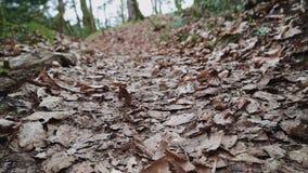 在用在特写镜头的干燥叶子盖的森林道路的飞行 股票视频