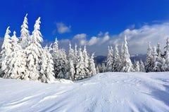 在用好的树站立的雪盖的草坪倾吐了与雪花在冷淡的冬日 免版税库存图片