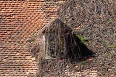在用干履带牵引装置植物几乎完全地盖的古国房子的蠕动的看的屋顶窗口被包围与小 免版税库存图片