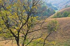 在用干燥黄色草盖的小山前面的树在晴朗的秋天下午 免版税库存图片