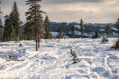 在用新鲜的雪包括的山的冬天结构树 免版税图库摄影
