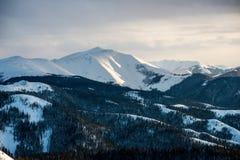 在用新鲜的雪包括的山的冬天结构树 免版税库存图片