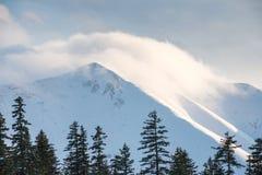 在用新鲜的雪包括的山的冬天结构树 免版税库存照片