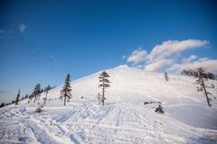 在用新鲜的雪包括的山的冬天结构树 库存照片