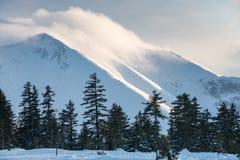 在用新鲜的雪包括的山的冬天结构树 库存图片