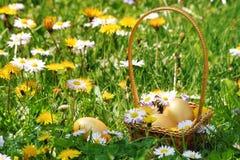 金黄复活节彩蛋篮子 库存照片