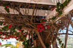在用有c的上升的植物盖的一个美丽的树荫处的特写镜头 库存照片