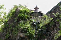 在用植物墙壁盖的中世纪的一个街道灯笼在马斯特里赫特,荷兰 免版税库存图片