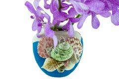 在用海壳装饰的花瓶的桃红色mokara兰花 查出 库存图片