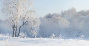 在用灰白盖的河附近的冬天树在早晨点燃了与 免版税库存照片