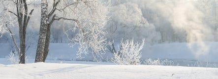 在用灰白盖的河附近的冬天树在早晨点燃了与 免版税库存图片