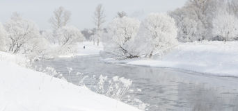 在用灰白盖的河附近的冬天树在早晨点燃了与 库存照片