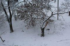 在用白色雪盖的树城市 在天空中,飞行的雪花 结冰的残破的树 库存图片