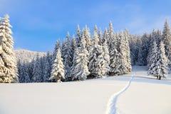 在用白色雪盖的草坪有导致密集的森林的一条被践踏的道路 免版税库存照片