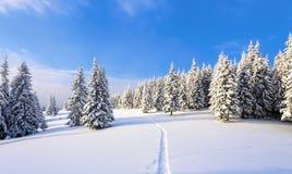 在用白色雪盖的草坪有导致密集的森林的一条被践踏的道路 库存图片
