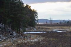 在用第一雪盖的森林附近使草甸环境美化在晚秋天晚上,乡下 免版税库存照片