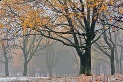 在用第一雪盖的秋天森林里使模糊 免版税库存图片