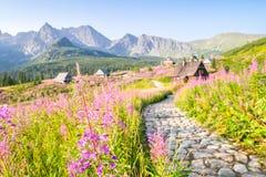 在用花装饰的草甸驱散的木小屋 免版税图库摄影