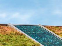 在用隔离的sedum盖的屋顶的太阳电池板 免版税库存图片
