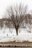 在用雪包括在Fukidashi公园附近在北海道,日本的基础上的不生叶的树 免版税库存图片