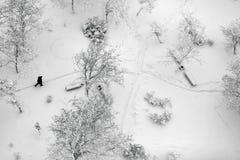 在用雪盖的冬天公园的顶视图 免版税图库摄影