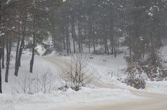 在用雪盖的密集的森林旁边的路 免版税库存图片