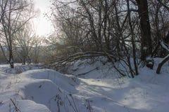 在用雪盖的河岸的树 库存照片