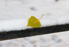 在用雪盖的路轨的一片黄色叶子 图库摄影