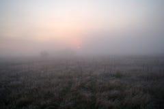 在用霜冷的有雾的早晨盖的森林附近的草甸 库存照片