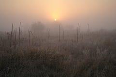 在用霜冷的有雾的早晨盖的森林附近的草甸 图库摄影