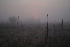 在用霜冷的有雾的早晨盖的森林附近的草甸 库存图片