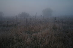 在用霜冷的有雾的早晨盖的森林附近的草甸 免版税库存照片