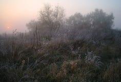 在用霜冷的有雾的早晨盖的森林附近的草甸 免版税图库摄影
